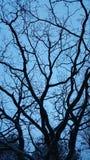 黑暗的结构树 图库摄影