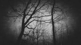 黑暗的结构树 免版税库存照片
