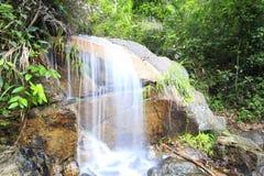 暗藏一点瀑布的森林 库存照片