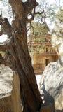 暗藏的寺庙 免版税图库摄影