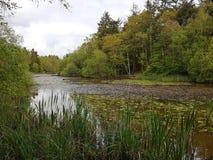 暗藏的湖在英国森林地 免版税图库摄影