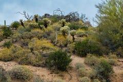 暗藏的珍宝在菲尼斯亚利桑那附近很多 库存图片