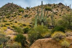 暗藏的珍宝在菲尼斯亚利桑那附近很多 免版税图库摄影