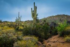 暗藏的珍宝在菲尼斯亚利桑那附近很多 免版税库存图片