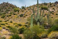 暗藏的珍宝在菲尼斯亚利桑那附近很多 图库摄影