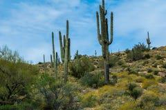 暗藏的珍宝在菲尼斯亚利桑那附近很多 免版税库存照片