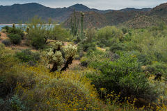 暗藏的珍宝在菲尼斯亚利桑那附近很多 库存照片