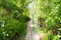 暗藏的石道路在森林里 免版税图库摄影