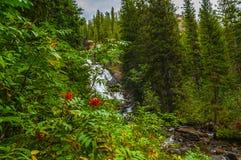 暗藏的秋天-格兰特Teton 免版税图库摄影