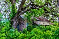暗藏的老被放弃的棚子在得克萨斯 库存图片