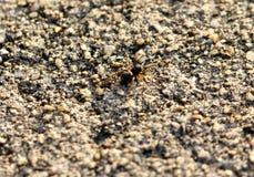 暗藏的蜘蛛 库存图片