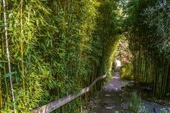 暗藏的走道在北加利福尼亚 库存照片