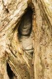 暗藏的面孔, Ta Prohm寺庙,吴哥窟,柬埔寨 免版税库存图片