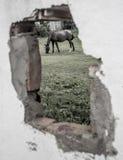 暗藏的马 免版税图库摄影
