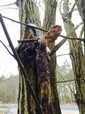 暗藏的geocache在森林里 图库摄影