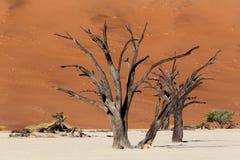 暗藏的Vlei美好的风景在纳米比亚沙漠 免版税库存图片