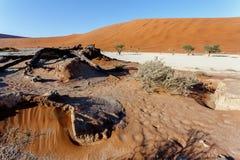 暗藏的Vlei美好的风景在纳米比亚沙漠 免版税库存照片