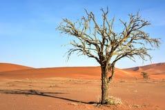 暗藏的Vlei,纳米比亚 免版税库存照片