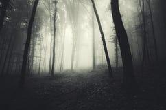 黑暗被困扰的森林背景 库存照片
