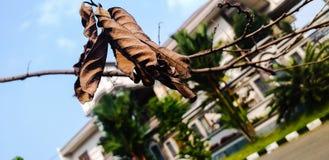暗褐色和干燥枝杈 图库摄影