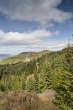 暗褐色Dearduil和森林Inverfarigaig的在苏格兰 库存图片