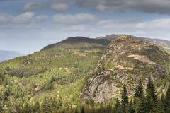 暗褐色Dearduil和森林Inverfarigaig的在苏格兰 免版税图库摄影