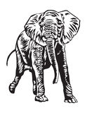 暴跳的大象 库存照片