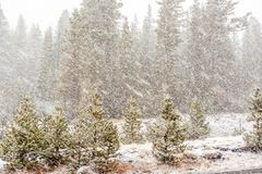 暴风雪起点在优胜美地国家公园 免版税库存图片