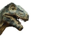 暴龙rex和空白的区域在右边 查出 免版税库存照片