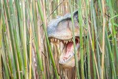 暴龙Rex 免版税库存照片