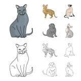 暹罗和其他种类 猫品种设置了在动画片,概述样式传染媒介标志股票例证网的汇集象 皇族释放例证