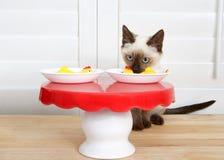 暹罗小猫在小饭桌上 免版税库存图片