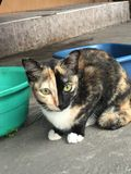 暹罗猫坐床和看窗口,与看鸟的蓝眼睛的白色猫 免版税库存照片