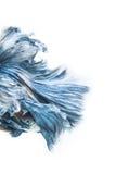 暹罗betta鱼收藏 免版税库存图片