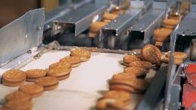 曲奇饼从在传送带上的机械输送管落 股票录像