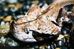 在大理石的蛇 库存照片
