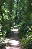 曲折前进它的方式的狭窄的道路通过有发光通过树的阳光的一个森林冠上 免版税库存照片