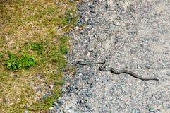 曲折前进爬行在草的路面 图库摄影