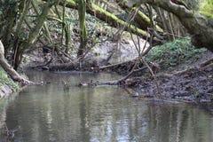 曲折河 库存图片
