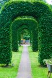 曲拱修剪的花园 库存照片
