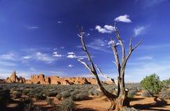 曲拱停止的国家公园结构树 免版税库存照片