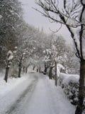 曲拱冬天 库存照片