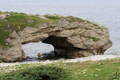 曲拱成拱形地方上一个的公园 免版税图库摄影