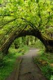曲拱森林雨 图库摄影