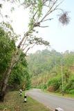 曲线路在森林里 库存图片