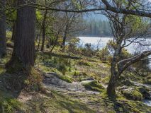 更低的湖的岸的被日光照射了森林地古老修道院站点的Glendalough的在威克洛郡在爱尔兰 免版税库存图片