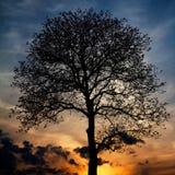 更加早期的有雾的早晨剪影结构树 免版税图库摄影