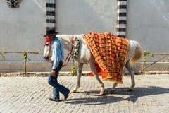 更加温驯的步行与黄色和红色样式织品的马对此,为印地安婚礼做准备在曼谷,泰国 免版税库存照片