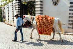 更加温驯的步行与黄色和红色样式织品的马对此,为印地安婚礼做准备在曼谷,泰国 库存图片