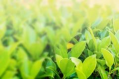 更加蓝色的背景,绿色自然以做backgrou的自由空间 图库摄影